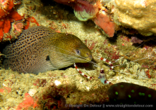 Moray Eel, underwater photography in raja ampat
